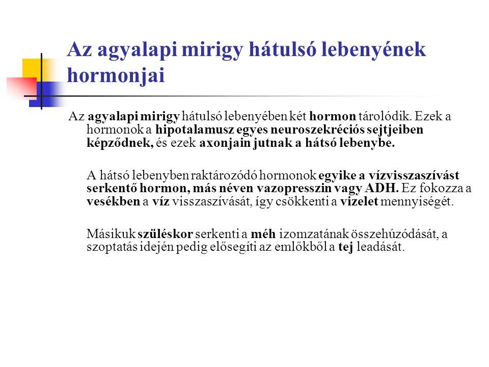Az agyalapi mirigy hátulsó lebenyének hormonjai
