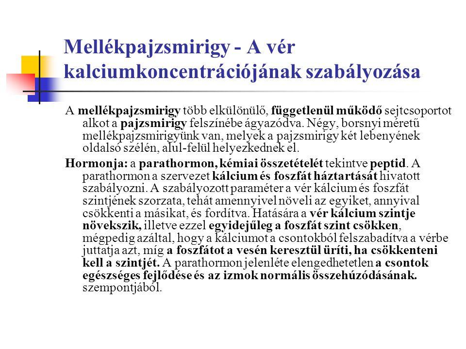 Mellékpajzsmirigy - A vér kalciumkoncentrációjának szabályozása
