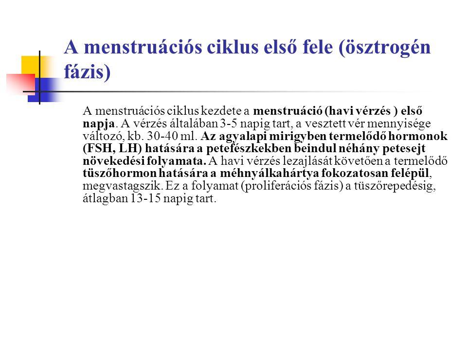 A menstruációs ciklus első fele (ösztrogén fázis)