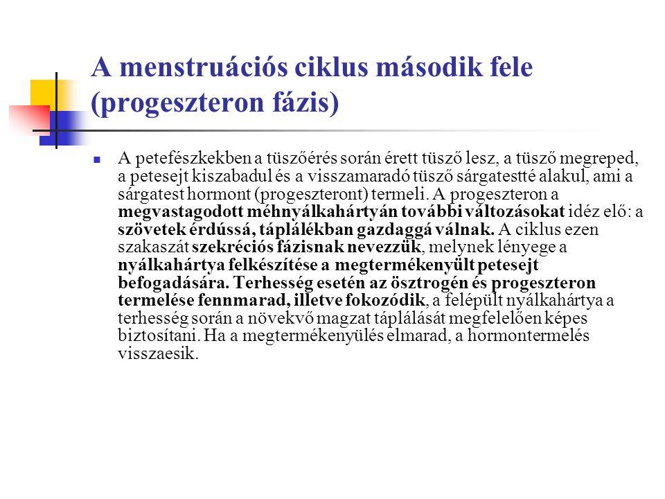 A menstruációs ciklus második fele (progeszteron fázis)