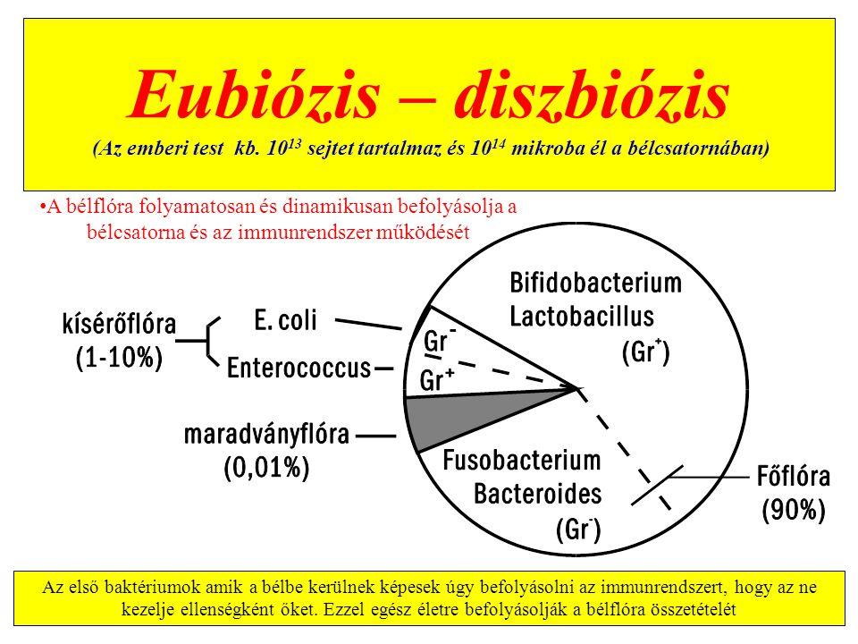 Eubiózis – diszbiózis (Az emberi test kb