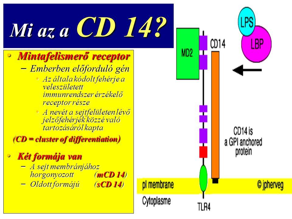 Mi az a CD 14 Mintafelismerő receptor Emberben előforduló gén