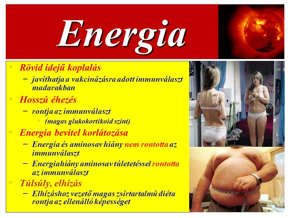 Energia Rövid idejű koplalás Hosszú éhezés Energia bevitel korlátozása