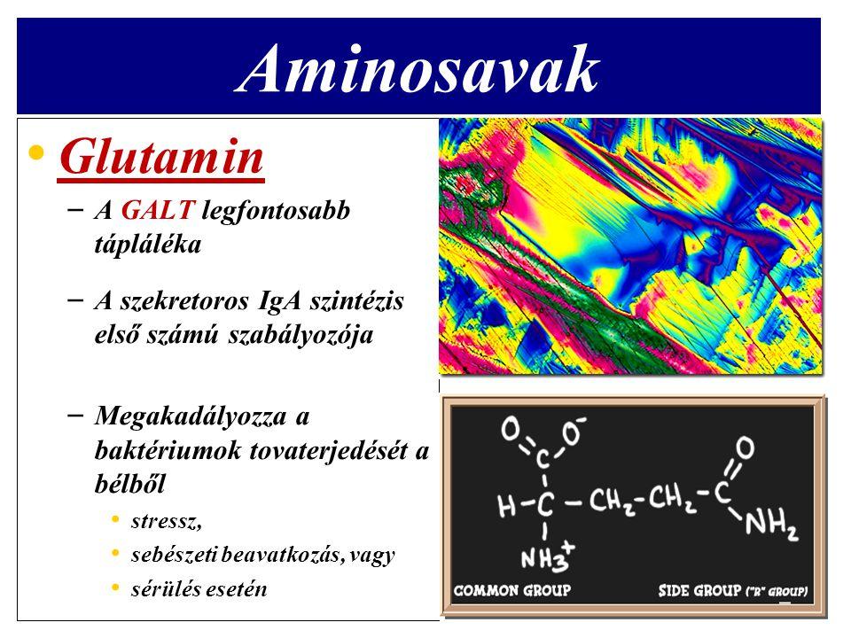 Aminosavak Glutamin A GALT legfontosabb tápláléka