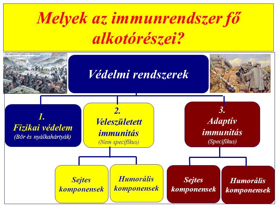 Melyek az immunrendszer fő alkotórészei