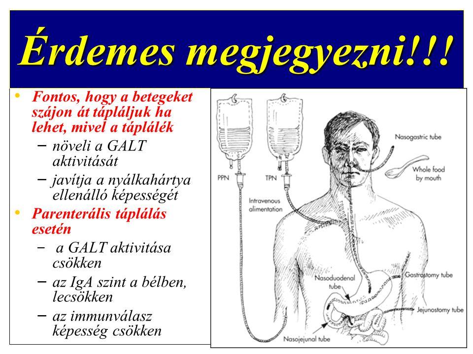 Érdemes megjegyezni!!! Fontos, hogy a betegeket szájon át tápláljuk ha lehet, mivel a táplálék. növeli a GALT aktivitását.