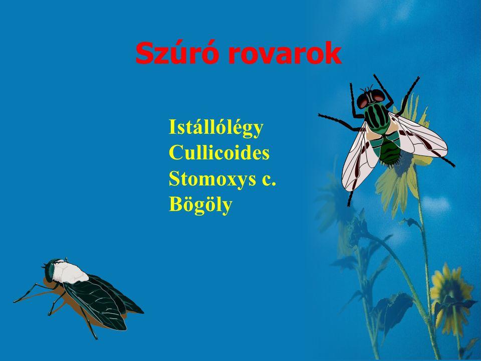 Szúró rovarok Istállólégy Cullicoides Stomoxys c. Bögöly