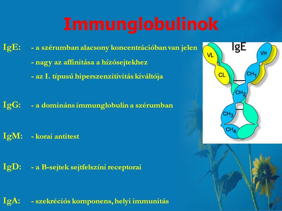 Immunglobulinok IgE: - a szérumban alacsony koncentrációban van jelen
