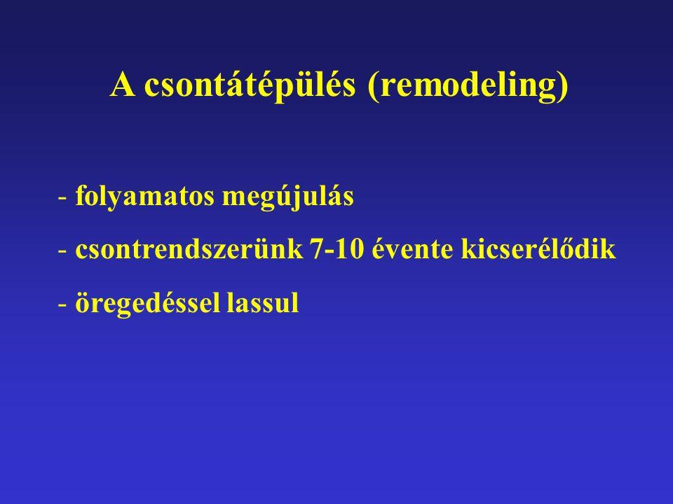 A csontátépülés (remodeling)