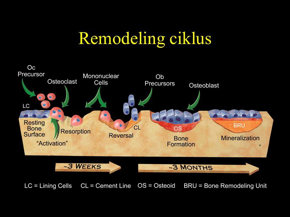 Remodeling ciklus