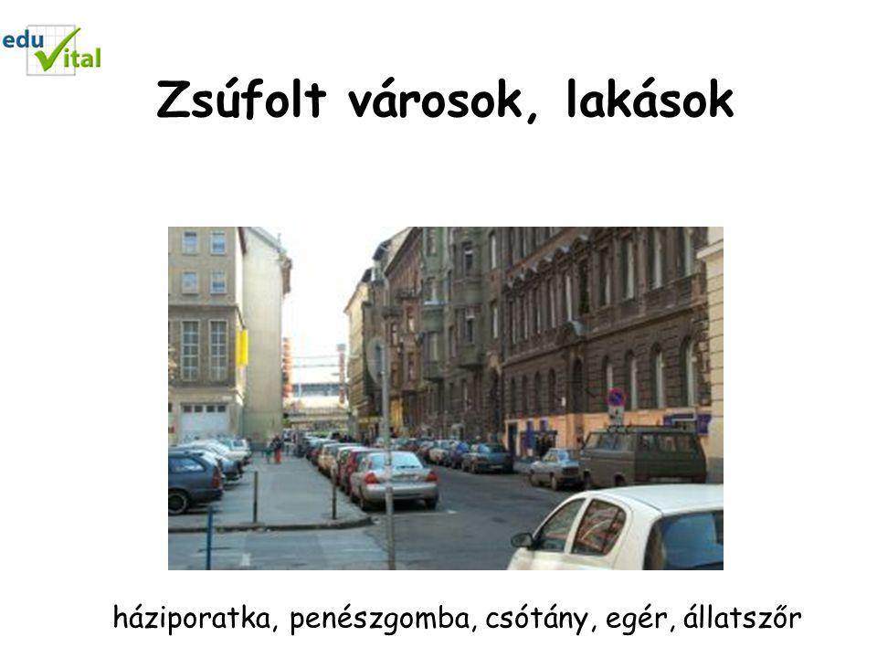 Zsúfolt városok, lakások