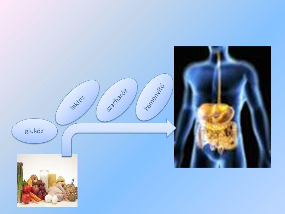 keményítő szacharóz laktóz glükóz
