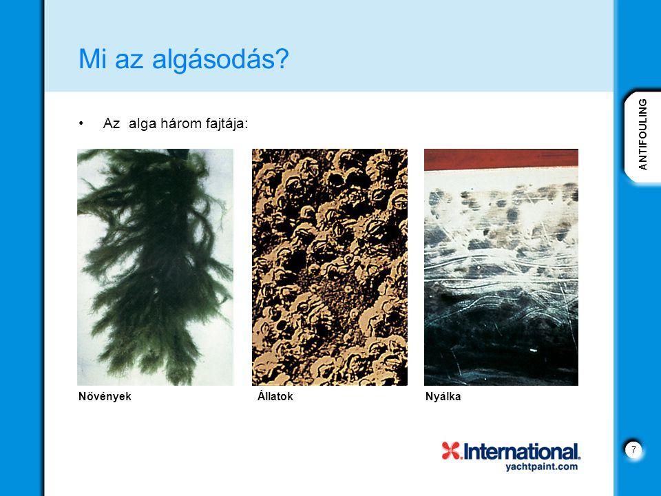 Mi az algásodás Az alga három fajtája: Növények Állatok Nyálka