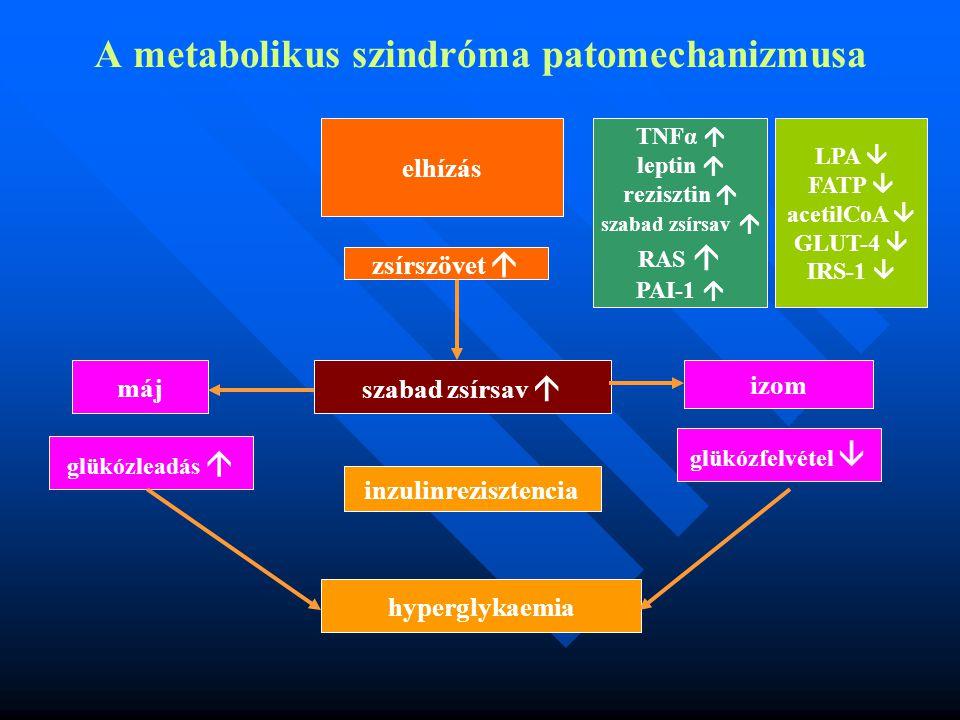 A metabolikus szindróma patomechanizmusa