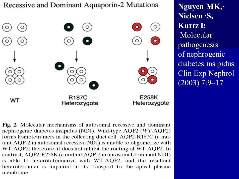 Nguyen MK,· Nielsen ·S, Kurtz I: Molecular. pathogenesis. of nephrogenic. diabetes insipidus. Clin Exp Nephrol.