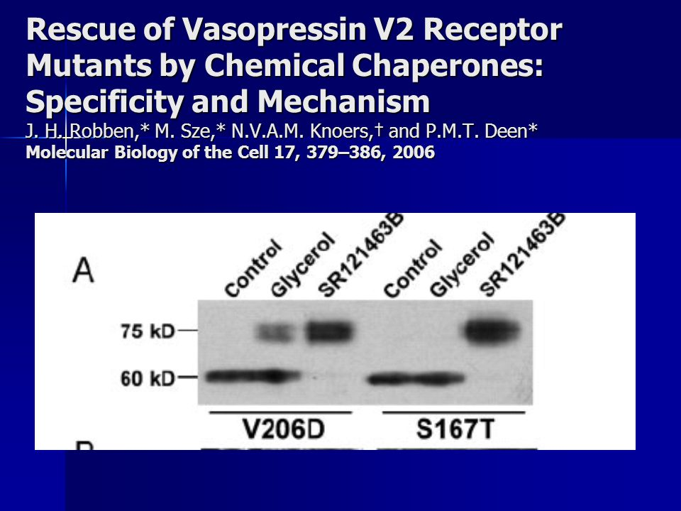 Rescue of Vasopressin V2 Receptor Mutants by Chemical Chaperones: Specificity and Mechanism J.
