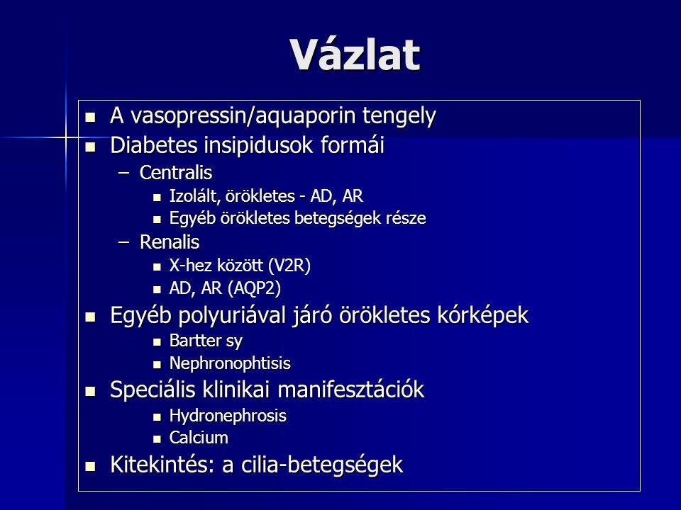 Vázlat A vasopressin/aquaporin tengely Diabetes insipidusok formái