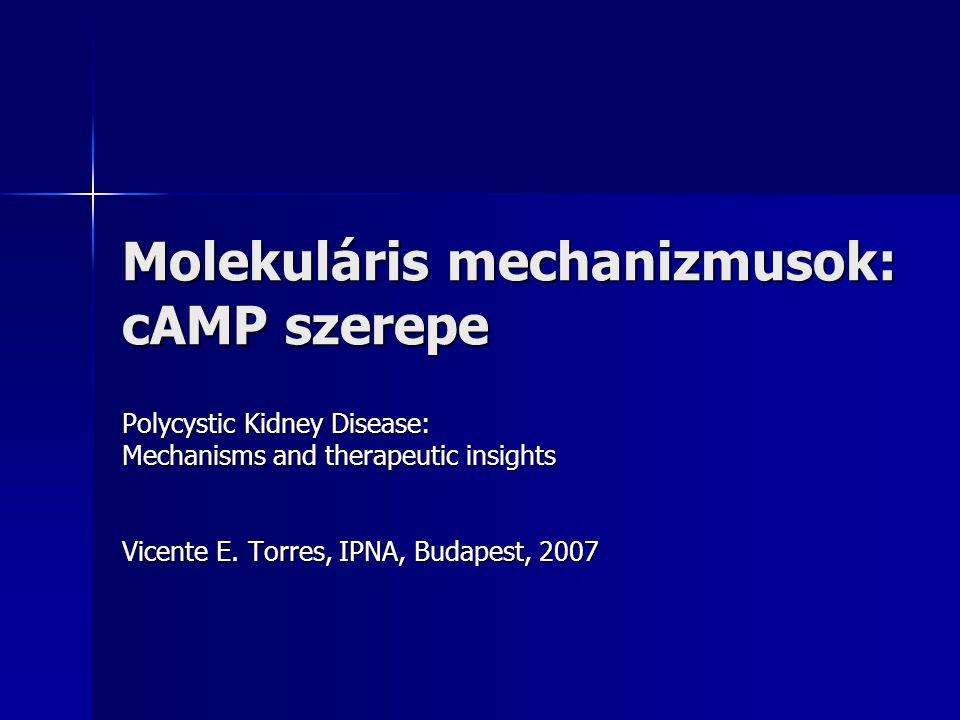 Molekuláris mechanizmusok: cAMP szerepe