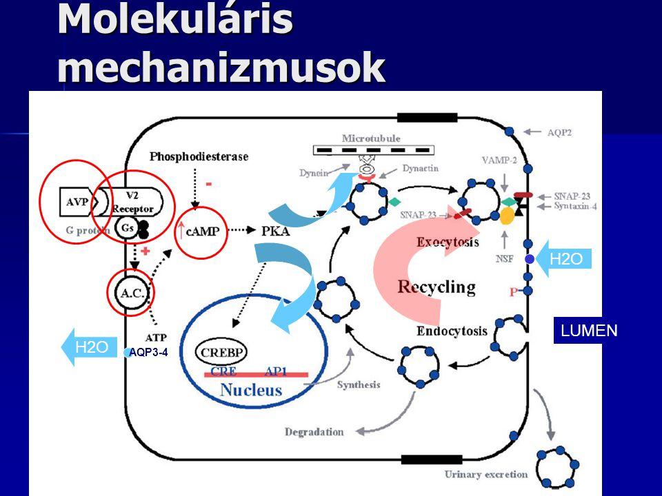 Molekuláris mechanizmusok