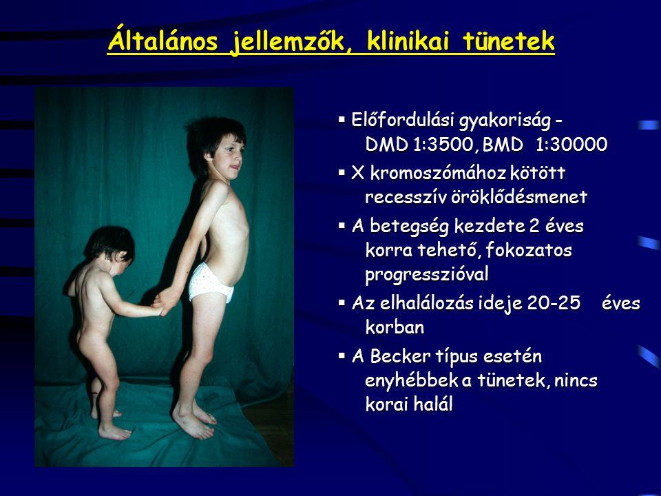 Általános jellemzők, klinikai tünetek