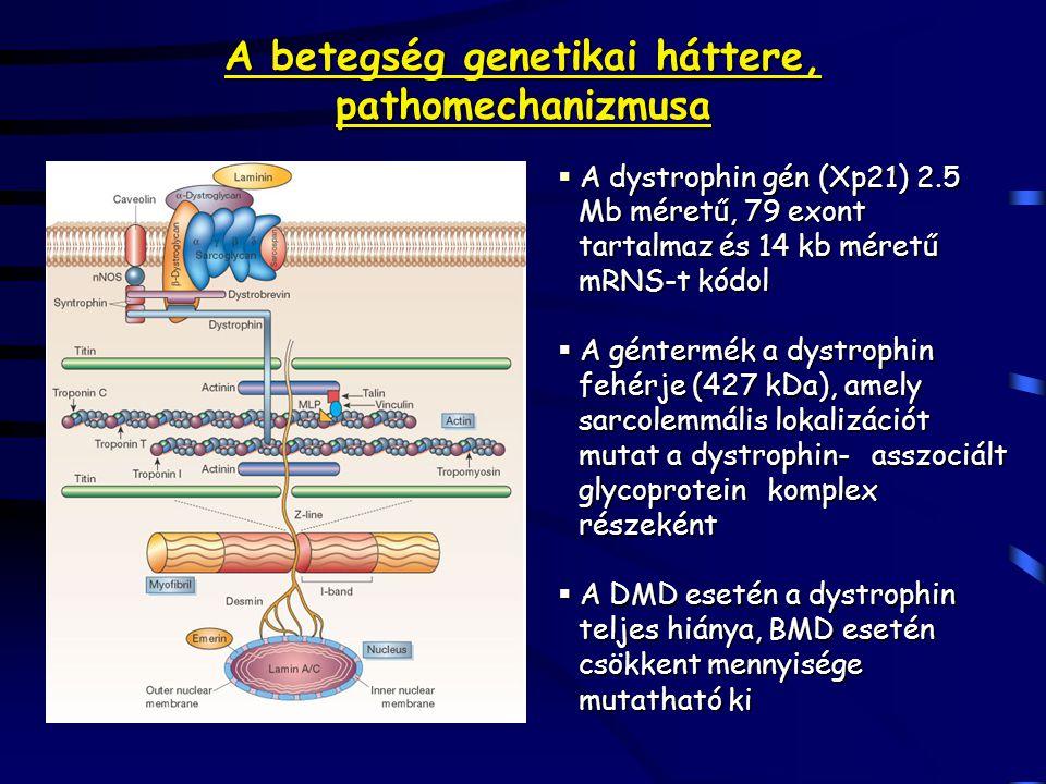 A betegség genetikai háttere, pathomechanizmusa