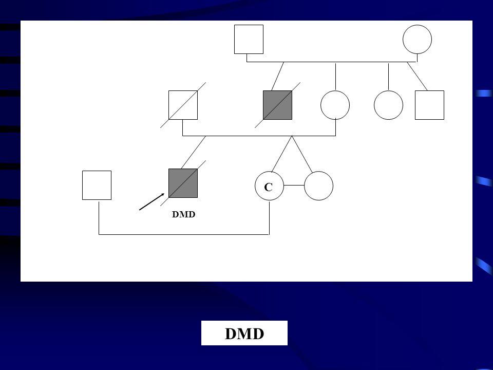C DMD DMD