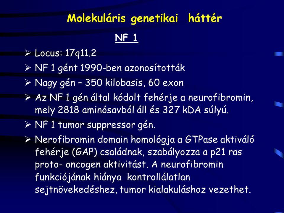Molekuláris genetikai háttér