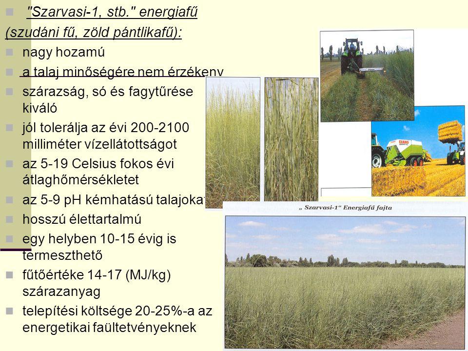 Szarvasi-1, stb. energiafű (szudáni fű, zöld pántlikafű):