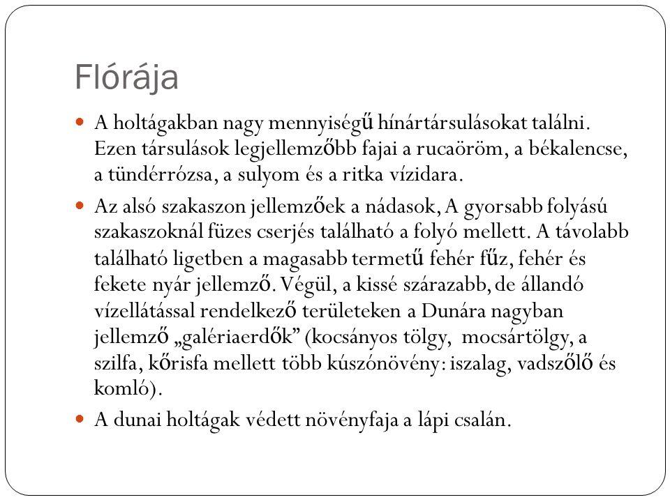 Flórája