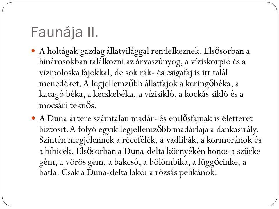 Faunája II.