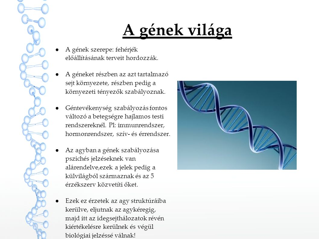 A gének világa A gének szerepe: fehérjék előállításának terveit hordozzák.