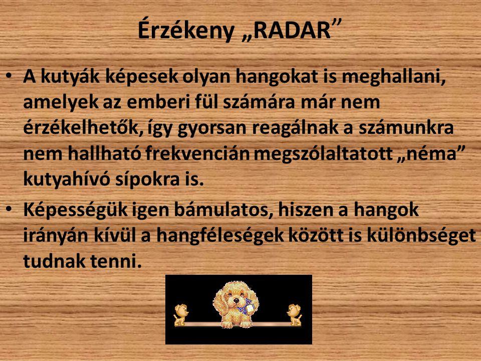 """Érzékeny """"RADAR"""
