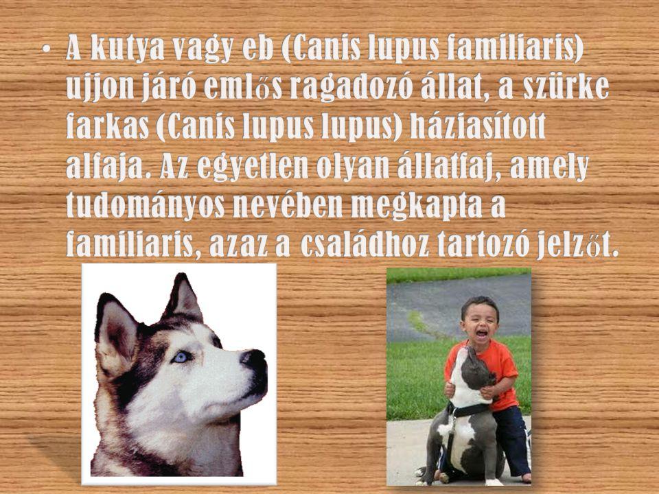 A kutya vagy eb (Canis lupus familiaris) ujjon járó emlős ragadozó állat, a szürke farkas (Canis lupus lupus) háziasított alfaja.