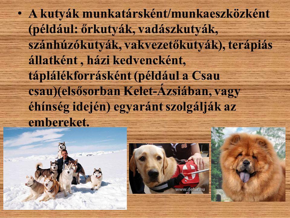 A kutyák munkatársként/munkaeszközként (például: őrkutyák, vadászkutyák, szánhúzókutyák, vakvezetőkutyák), terápiás állatként , házi kedvencként, táplálékforrásként (például a Csau csau)(elsősorban Kelet-Ázsiában, vagy éhínség idején) egyaránt szolgálják az embereket.