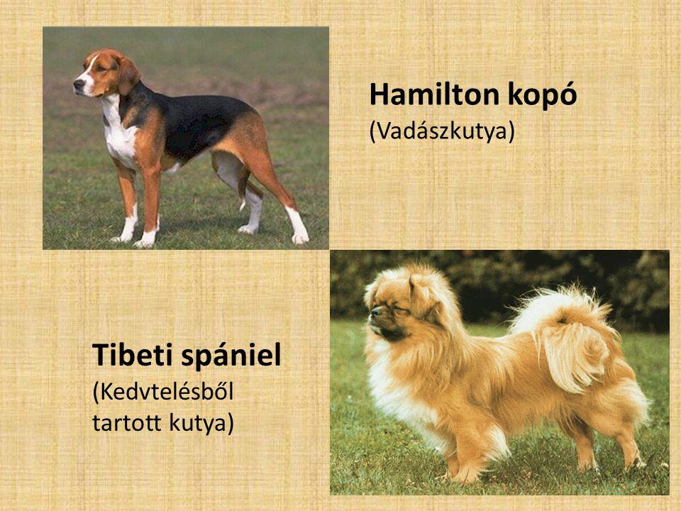 Hamilton kopó Tibeti spániel (Vadászkutya)