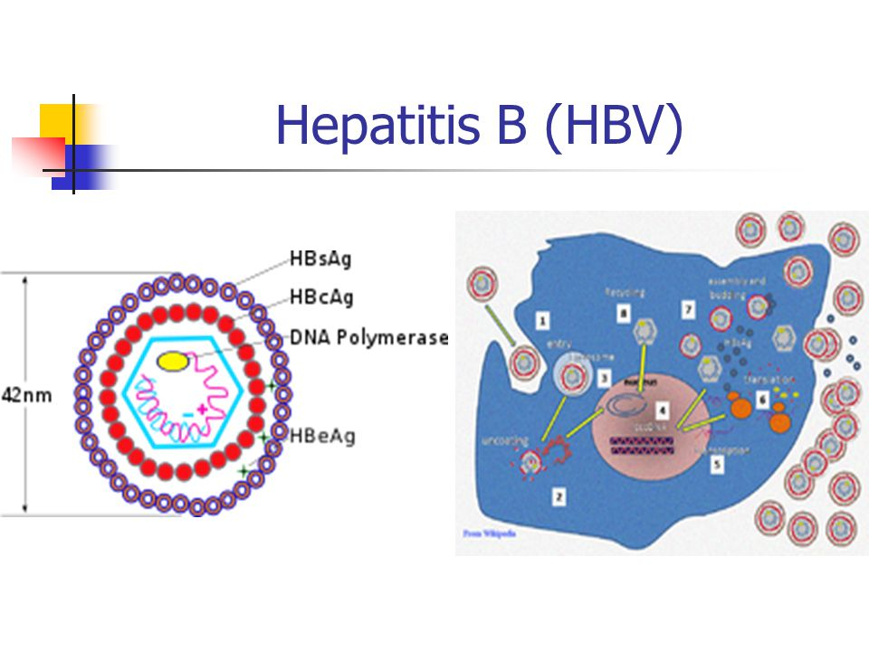 Hepatitis B (HBV)