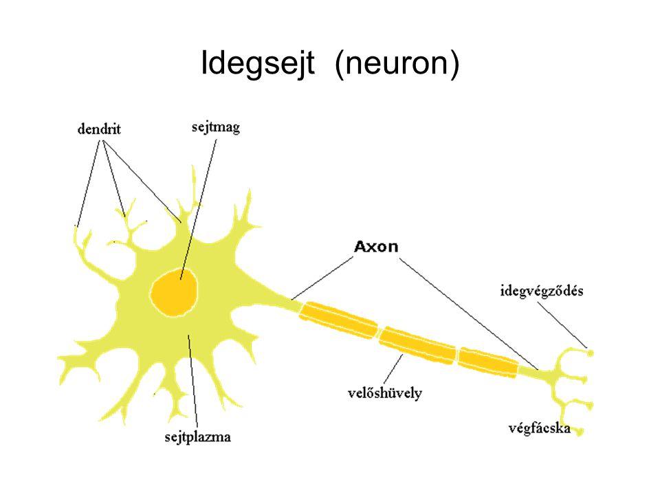 Idegsejt (neuron)
