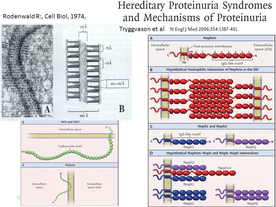 Rodenwald R:, Cell Biol, 1974, Tryggvason et al 4/4/2017