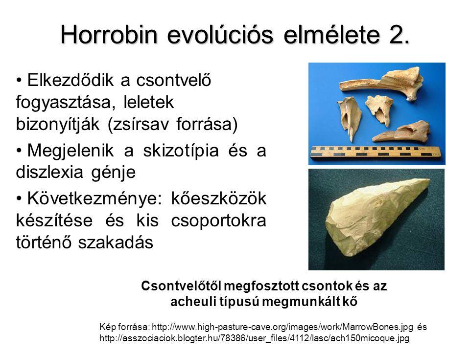 Horrobin evolúciós elmélete 2.