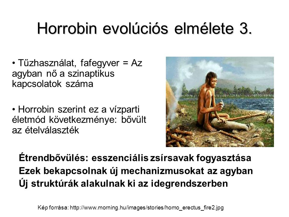 Horrobin evolúciós elmélete 3.