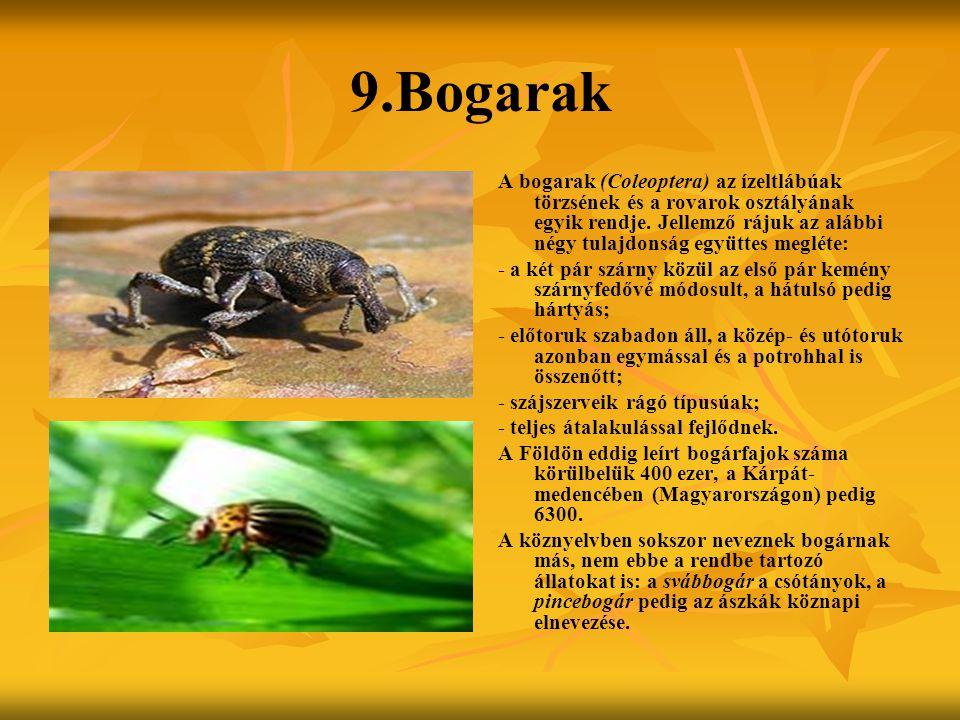 9.Bogarak