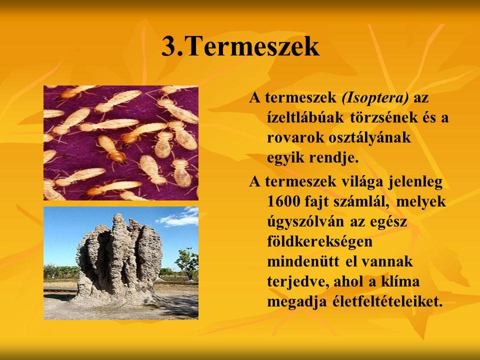 3.Termeszek A termeszek (Isoptera) az ízeltlábúak törzsének és a rovarok osztályának egyik rendje.
