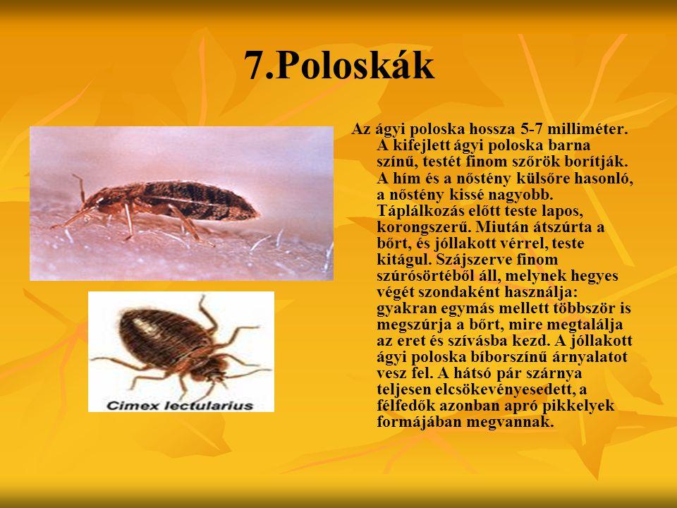 7.Poloskák