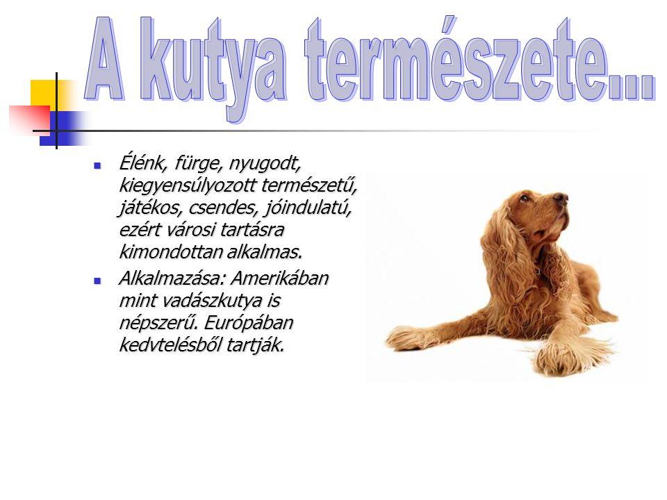 A kutya természete… Élénk, fürge, nyugodt, kiegyensúlyozott természetű, játékos, csendes, jóindulatú, ezért városi tartásra kimondottan alkalmas.