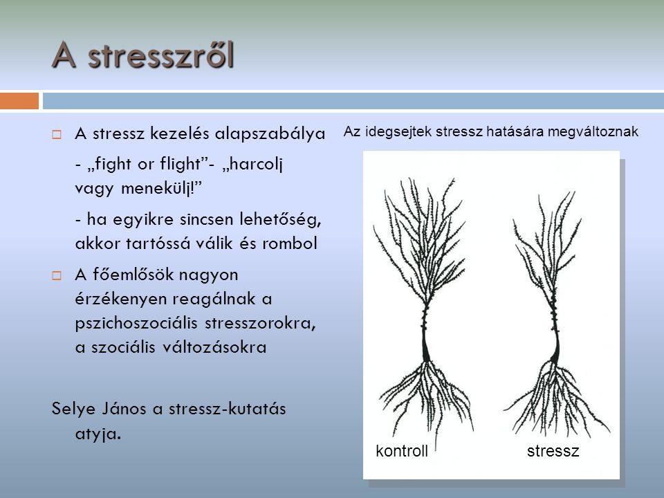 A stresszről A stressz kezelés alapszabálya