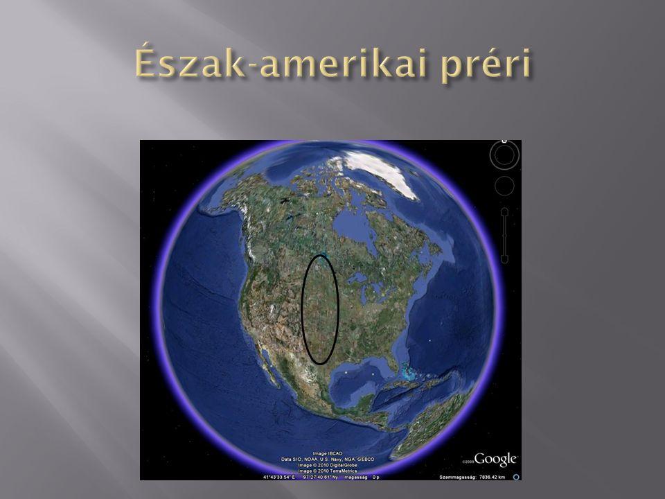 Észak-amerikai préri