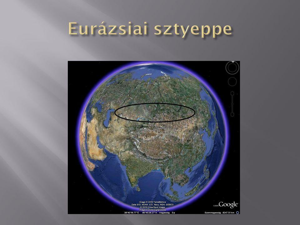 Eurázsiai sztyeppe