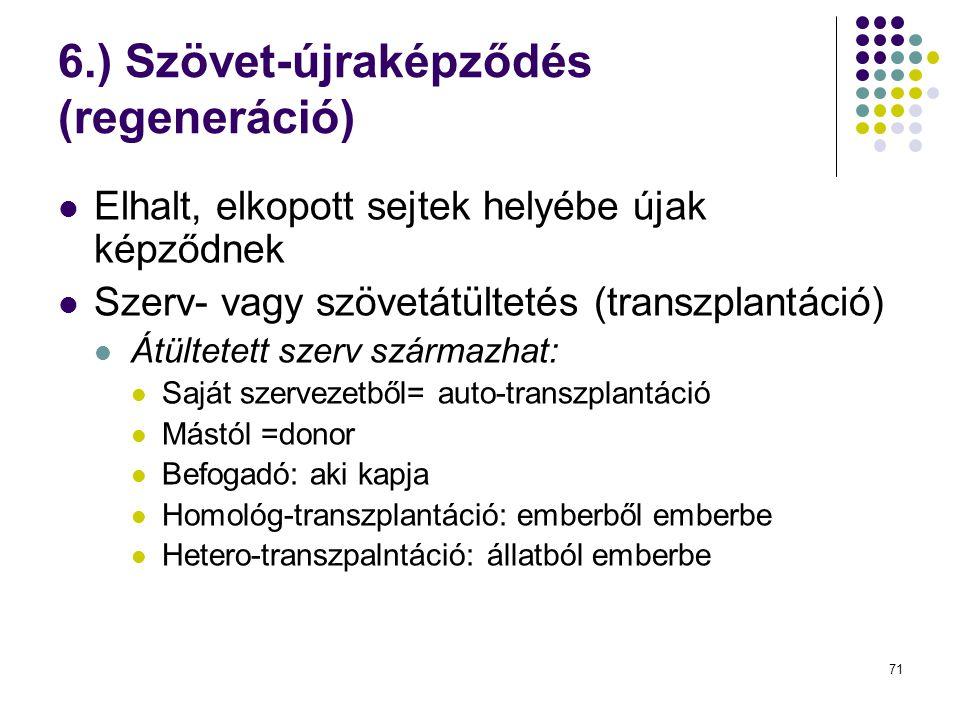 6.) Szövet-újraképződés (regeneráció)