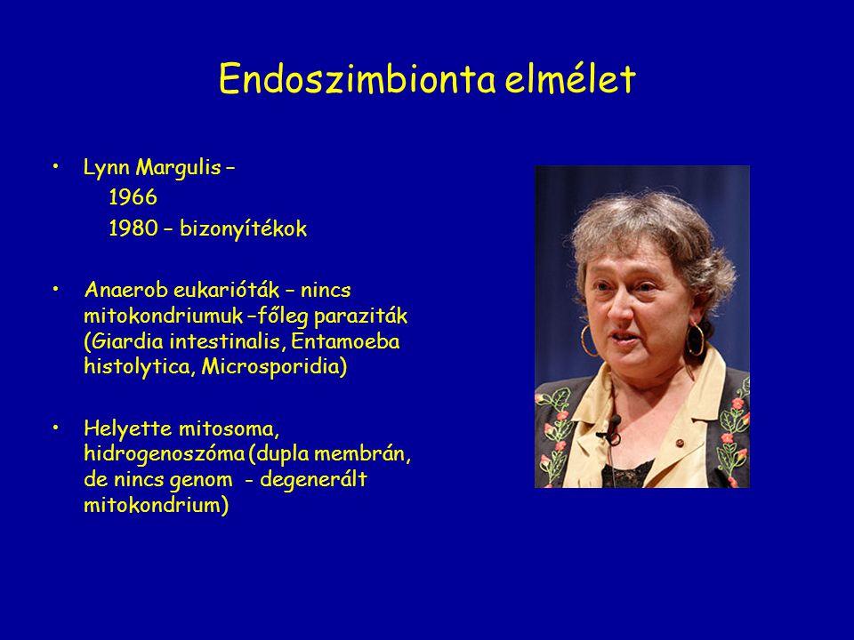 Endoszimbionta elmélet