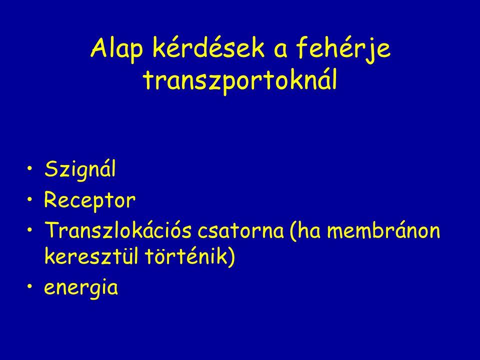 Alap kérdések a fehérje transzportoknál